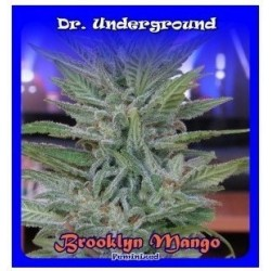 Brooklyn Mango 4 Fem. Dr....