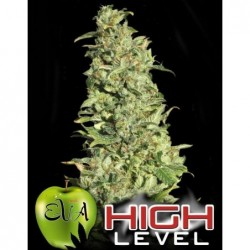 High Level 9 Fem. Eva Seeds