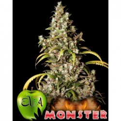 Monster 9 Fem. Eva Seeds