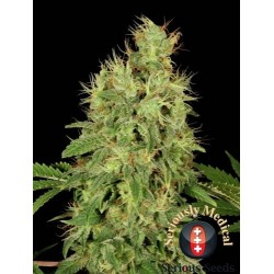 CBD Chronic 6 Fem. Serious...