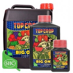 Big One Top Crop 250 ml