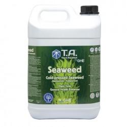 Algas Marinas (Seaweed) GHE...