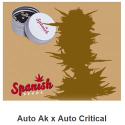 Auto Ak x Auto Critical de...
