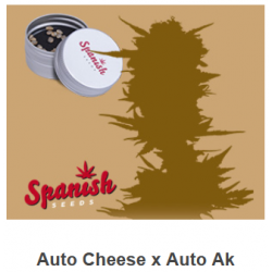 Auto Cheese x Auto AK de...
