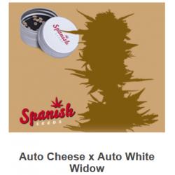 Auto Cheese x Auto White...