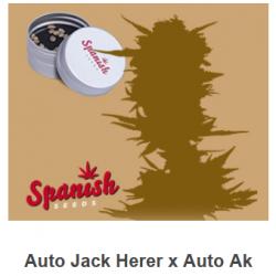 Auto Jack Herer x Auto AK...