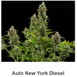 Auto New York Diesel de...