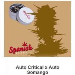 Auto Critical x Auto...