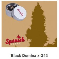 Black Domina x G13 de...