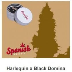 CBD Harlequin x Black...