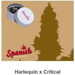 CBD Harlequin x Critical de...
