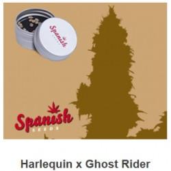 CBD Harlequin x Ghost Rider...