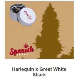 CBD Harlequin x Great White...