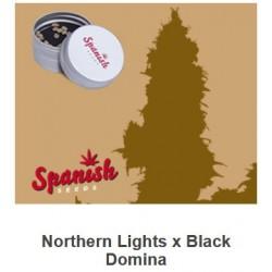 Northern Light x Black...