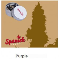 Purple de Spanish Seeds 50 Fem