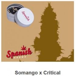 Somango x Critical de...