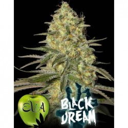 Black Dream 6 Fem. Eva Seeds