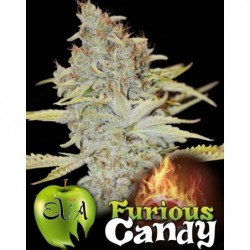 Furious Candy 6 Fem. Eva Seeds