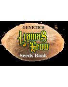 "Genetics ""Llamas Grow Seeds Bank"""
