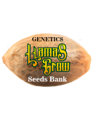 "Genetics ""Llamas Grow Seeds Bank"" Feminizadas"