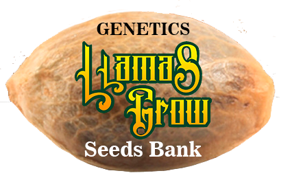 "Genetics ""Llamas Grow Seeds Bank"""